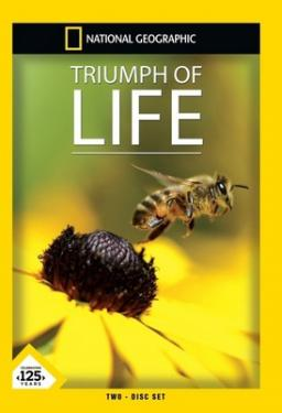 Triumph Of Life poster